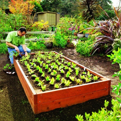 build a bed vegetable garden
