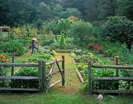 beautiful outdoor vegetable garden