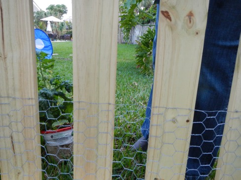 Keep critters out of garden with chicken wire